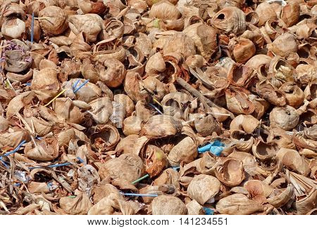Dump of coconut shell and drinking straws
