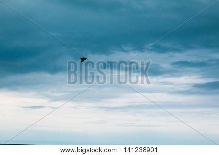 Several wild sea gulls on the beach.