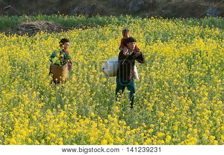 HA GIANG, VIET NAM, March 29, 2016 Hmong families, go through the gardens, in the spring. They are on their way home