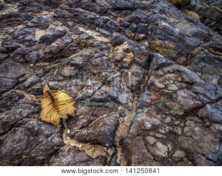 DRY DRIFTED LEAF BY THE ROCKS ON A WINDY DAY