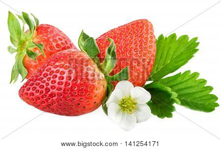 Strawberries on white. Fresh organic strawberry with leaf and flower