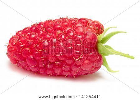 Single Giant, Elongated Raspberry