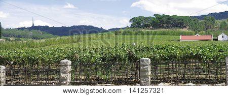 Grape Farm, Paarl, Western Cape South Africa 01 b