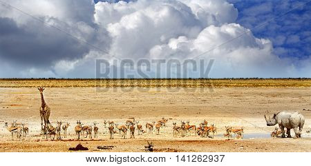 A vibrat waterhole in Etosha national park with giraffe, White Rhino & Springbok with a blue cloudy sky