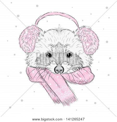 Raccoon in the winter scarf and headphones . Vector illustration for greeting card, poster, or print on clothes.