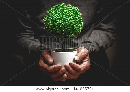 Decorative tree in a pot in the hands of an elderly man. Cultivation of ornamental plants concept