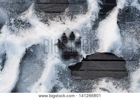 trace of dog paw on the snow; print of animal foot; footprint on ice;