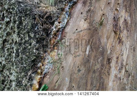 Wood and bark, moss on the bark of wooden, wooden background