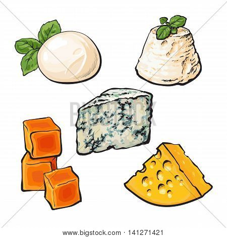 Set of different cheeses mozarella, cheddar, Roquefort, camembert and maasdam isolated sketch style illustration on white background. Various sorts of delicious hard and soft cheese