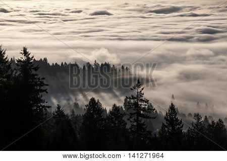 foggy forest with sunlight in the morning