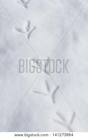 Bird Footprint on snow ground close up