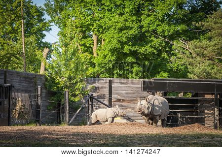 Rhinoceros And His Offspring Were Fed At The Zoo