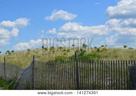 Wooden fencing around dunes and tall grass on Spectacle Island.