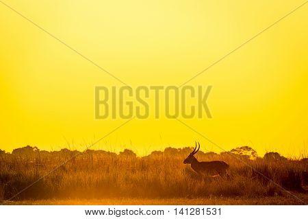 Impala Sunset Silhouette