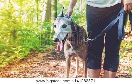 Young Woman With Her Greyhound