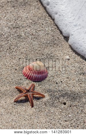 An orange starfish and a pink sea shell on a tropical beach with a wave of bubbles coming at them.