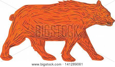 Illustration of an American black bearUrsus americanus a medium-sized bear native to North America walking viewed from side set on isolated white background done in retro style.