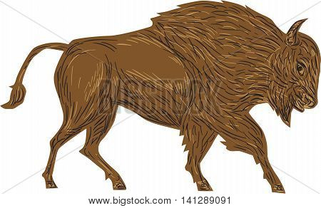Illustration of a North American bison plain bison wood bison or buffalo bull charging viewed from side on isolated white background done in retro style.