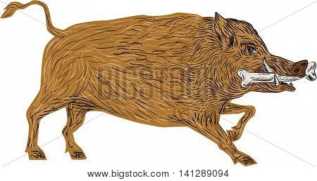 Illustration of a wild pig boar razorback walking with bone in mouth viewed from side set on isolated white background done in retro style.