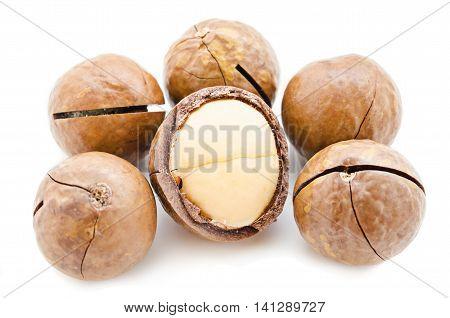 The Macadamia nut isolated on white background