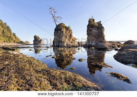 Three Graces rock formation at Garibaldi Oregon Coast during low tide