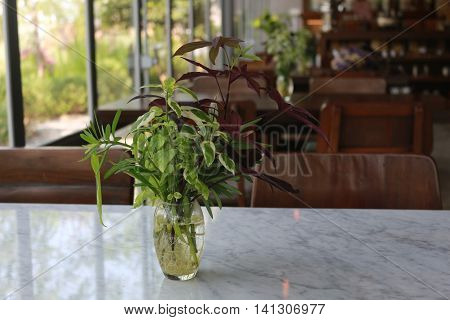 Aquatic Plant in clear vase on the white table