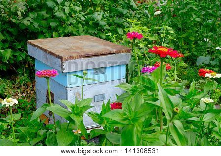 Old Wooden Beehives In The Garden And Some Flower