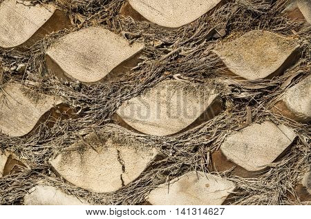 Palm tree trunk detail of the background pattern cut branches