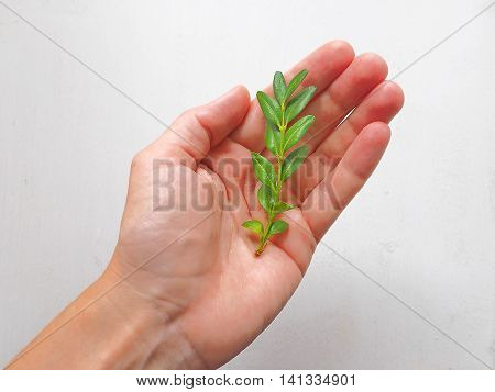 Nature Protection Concept. Human Hand Holding a Green Sprout.