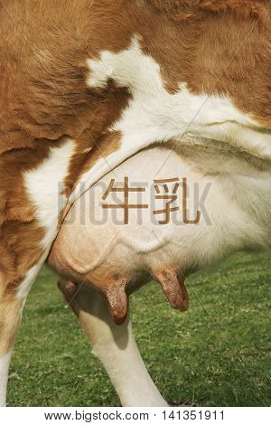 Extreme closeup of brown cow's udder with Japanese writing for milk