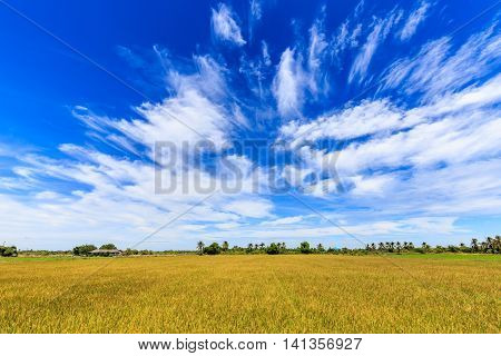 Rice field and beautiful sky in rural of Thailand
