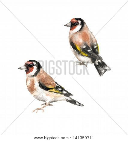 Hand drawn birds. Watercolor sketch of goldfinches isolated on white