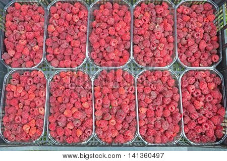 Freshly-picked fruits raspberries in ten baskets of half a kg in crates on the lawn