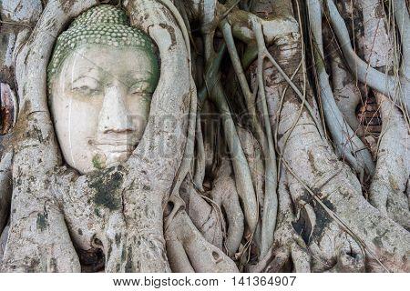 Head Of Sandstone Buddha In The Tree Roots. Wat Phra Mahathat, Ayutthaya, Thailand