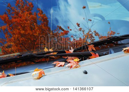 autumn leaves on the car windshield with tree and blue sky reflected