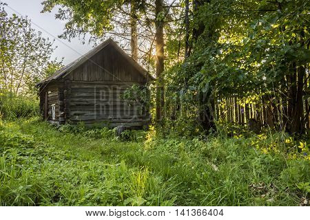 Old rustic log sauna among the trees and greenery a summer evening in Russia