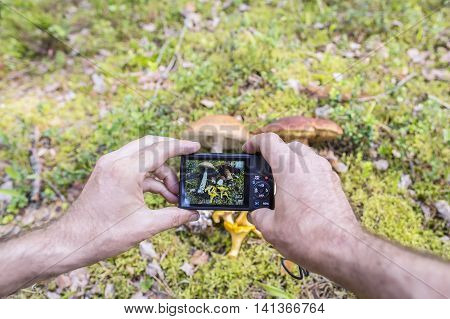 Man photographs on the camera edible mushrooms (boletus chanterelle leccinum) in the moss in a forest