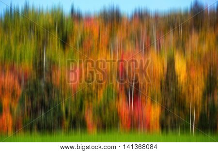 Fall foliage of birch and maple in an abstract landscape produced by camera motion.
