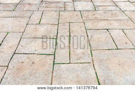 Leaves imprint on the sandstone tile in the walkway of the botanical garden.