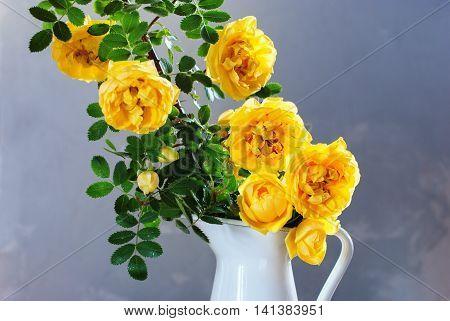 Dog Rose Yellow Rosa Canina Flowers White Jug