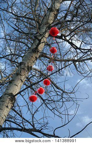 Traditional lanterns on the tree, China, Tibet, Lhasa