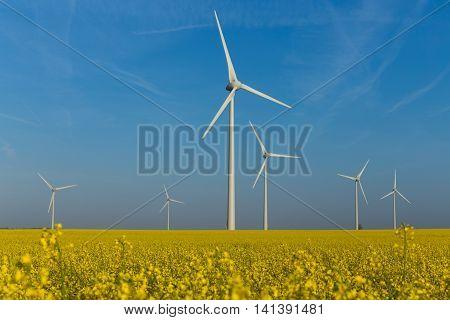 Wind turbine generators in the yellow rapeseed field under the blue sky