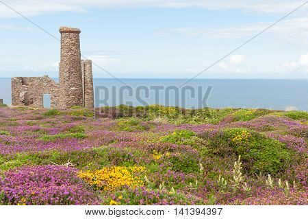 Historic Wheal Coates tin mine engine house ruins standing proud beyond fireld of brightly colored wild flowers on coast of Cornwall United Kingdom.