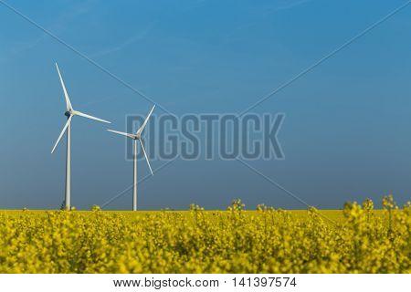 Two wind turbine generators in the yellow rapeseed field under the blue sky