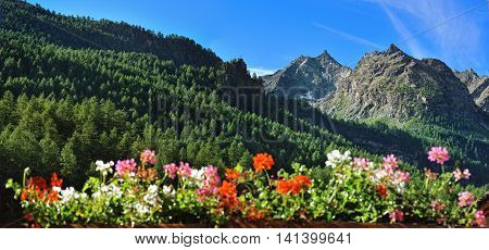 Alpine mountains with flowers in valley Rhemes Notre Dame Valle d'Aosta Italy