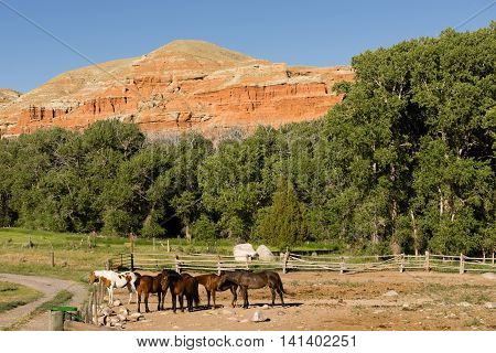 Corralled Horses Wyoming Badlands Ranch Livestock Animals