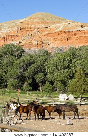 horses huddled together at the base of red rock buttes