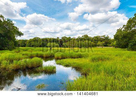 Florida wetland natural summer landscape with pond