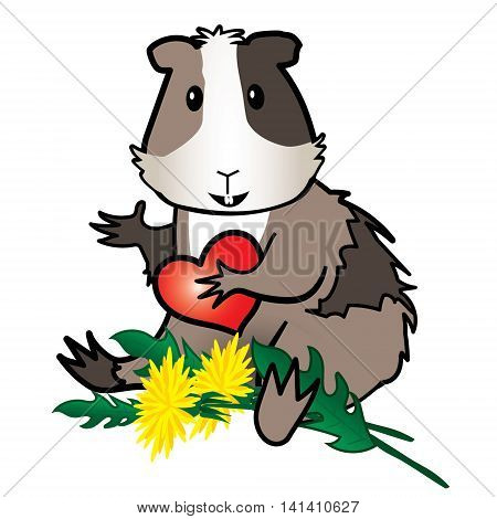 Hamster Guinea pig with dandelion -isolated on the white background