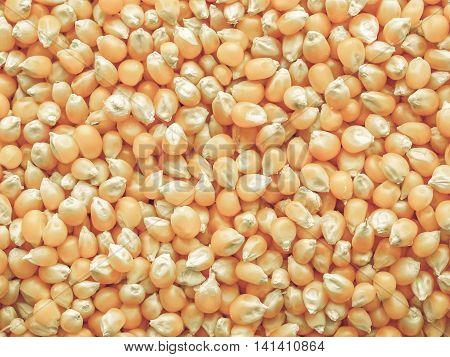 Maize Corn Vintage Desaturated